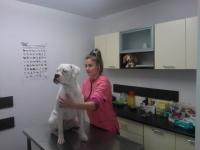 Tratamente veterinare