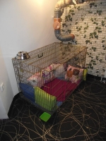 Spitalizare veterinara