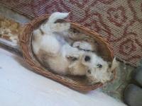 Investigații câini și pisici