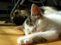 Consultatii veterinare caini si pisici