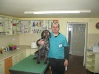 Consultatii veterinare