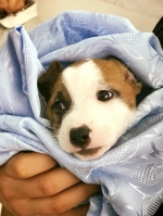 Servicii de chirurgie veterinară