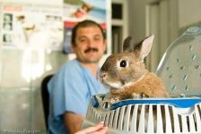 Consultatii animale de companie