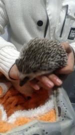 Îngrijire diverse animale