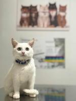 Consultatii veterinare de specialitate