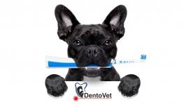Servicii stomatologie veterinara